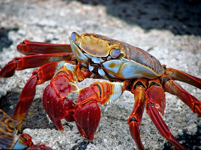 Crab, Animal, Aquatic, Archipelago, Beach, Ecuador