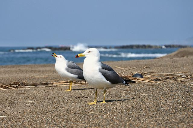 Animal, Sea, Beach, Sea Gull, Seagull, Bird, Seabird