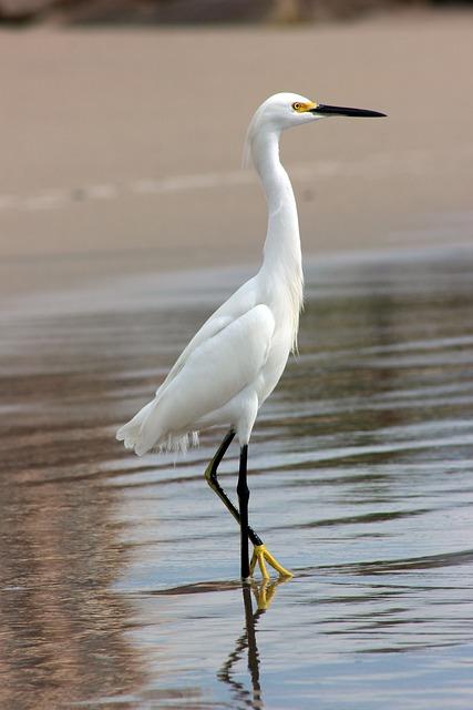 Gruya, Nature, Ocean, Beautiful, Bird, Beach, Sea