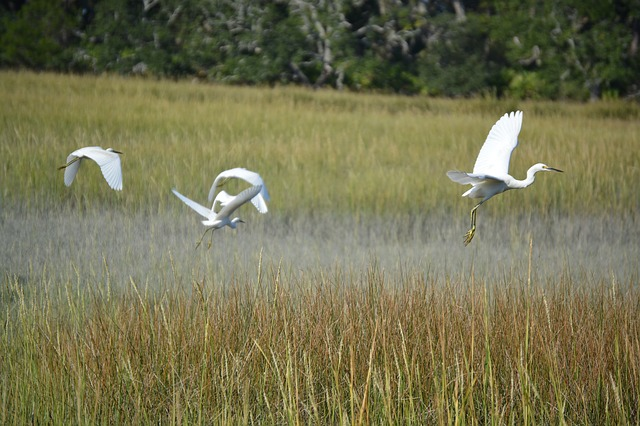 Jekyll Island, Birds, Nature, Beach, Coast