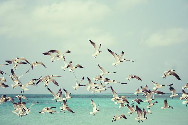 Seagulls, Beach, Bird, Birds, Wings, Nature, Sea