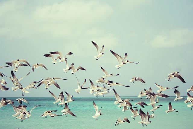 Seagulls, Beach, Bird, Birds, Wings, Nature, Sea