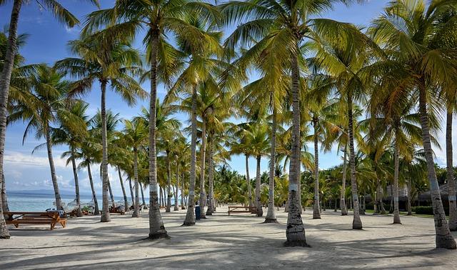 Bohol, Bohol Resorts, Palm Tree, Beach