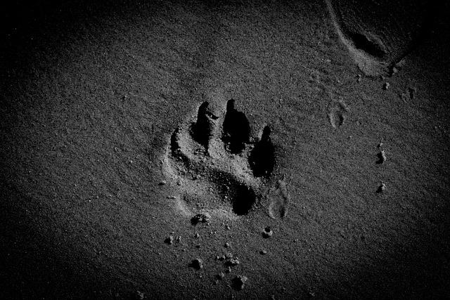 Dog Paw, Sand, Beach, Pet, Canine