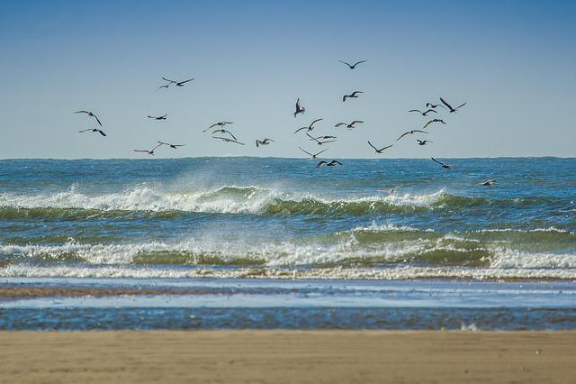 Gulls, Coast, Ocean, Beach, Wales, England