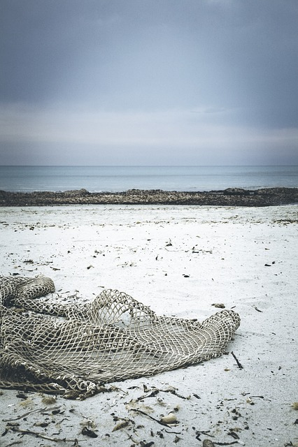 Beach, Drift Wood, Network, Fishing Net, Flotsam, Sand