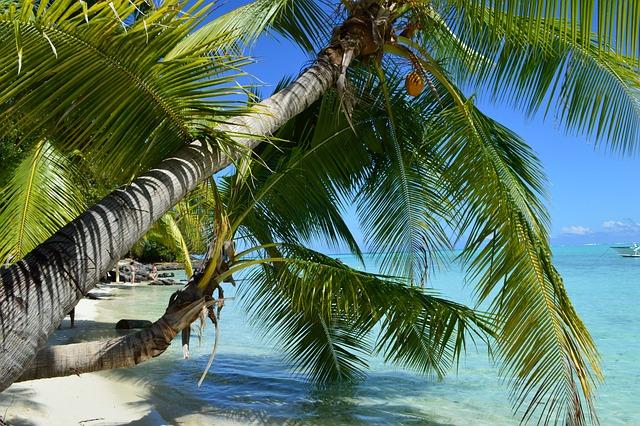Bora Bora, Beach, Paradise, Holiday