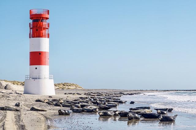Beach, Lighthouse, Crawl, Seals, North Sea, Island