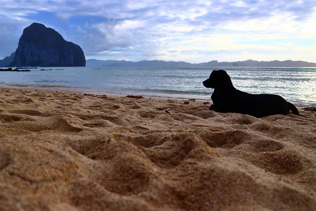 Dog, Beach, Sand, Water, Island, Philippines