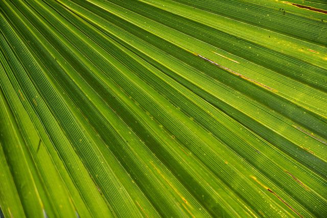 Palm, Leaf, James, Palm Tree, Close Up, Beach