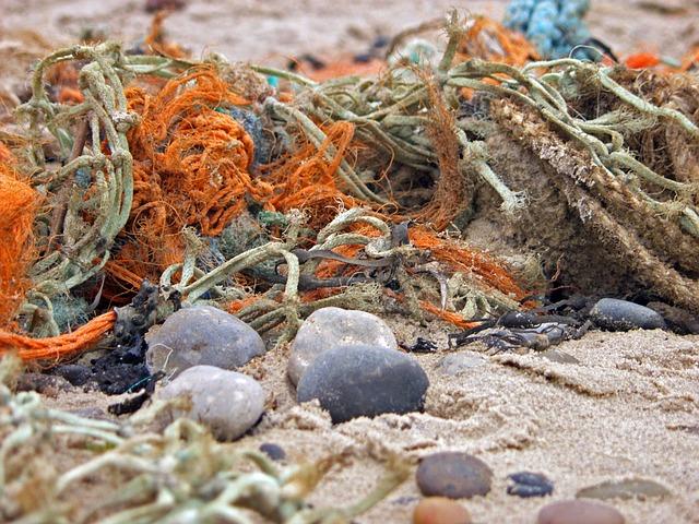 Flotsam And Jetsam, Coast, North Sea, Beach, Sea
