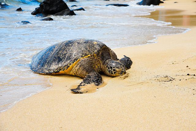 Turtle, Beach, Water, Sand, Sea, Ocean, Nature