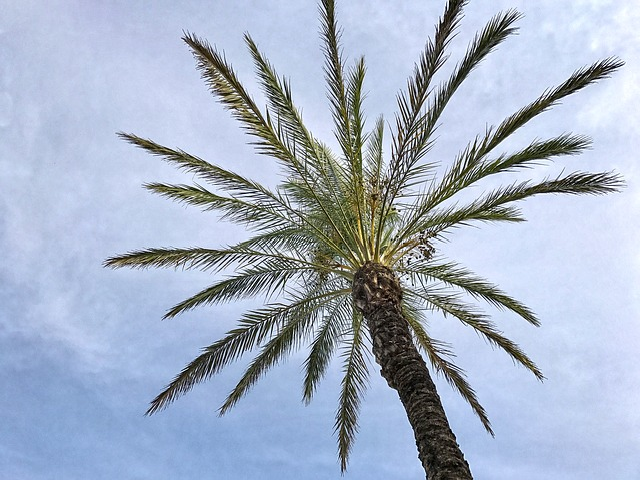 Palm, Sky, Clouds, Beach, Sunny