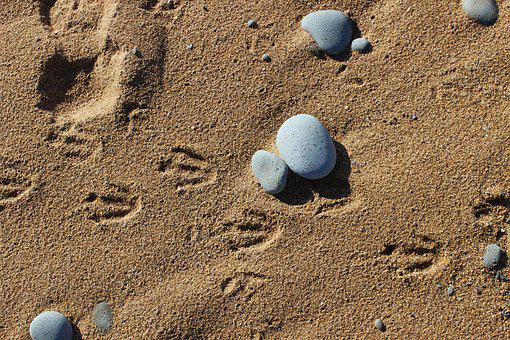Penguins, Footprints In The Sand, Animal Tracks, Beach