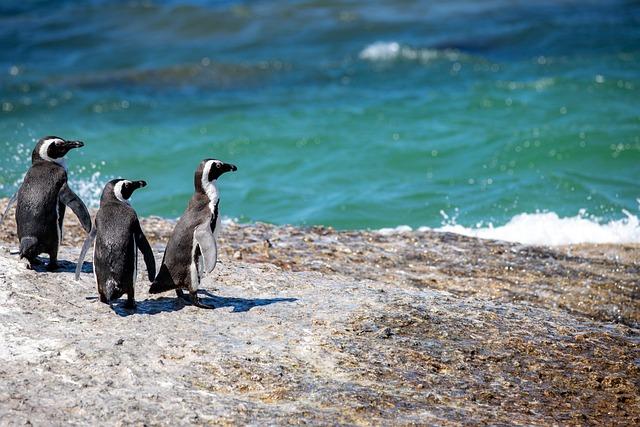 Penguins, Shore, Beach