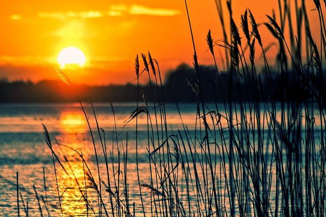 Lake, Reeds, Sunset, Landscape, Nature, Scenery, Beach