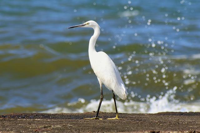 Animal, Sea, Beach, River, Estuary, Wave, Wild Birds
