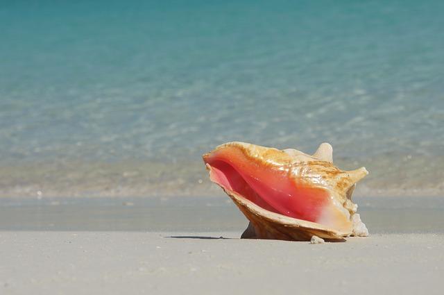 Bahamas, Beach, Caribbean, Seashell, Conch, Sand