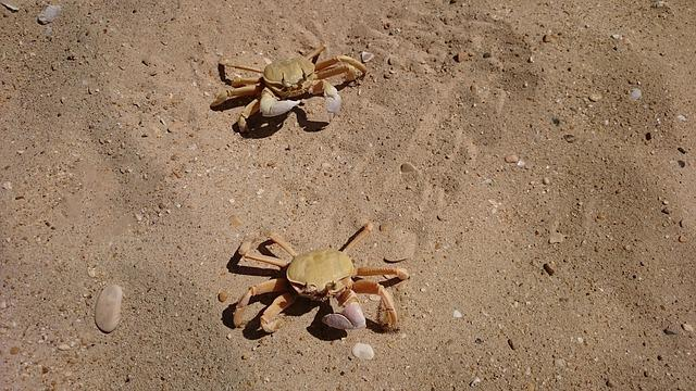 Crabs, Lobster, Beach, Sand, Nature