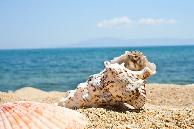 Beach, Seashell, Kavala, Sea