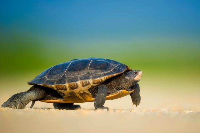 Sea, Turtle, Wildlife, Macro, Closeup, Beach, Sand