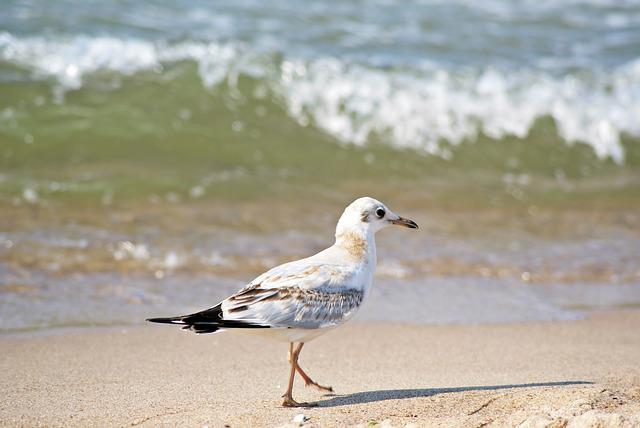 Sea, Beach, Birds, Seagull