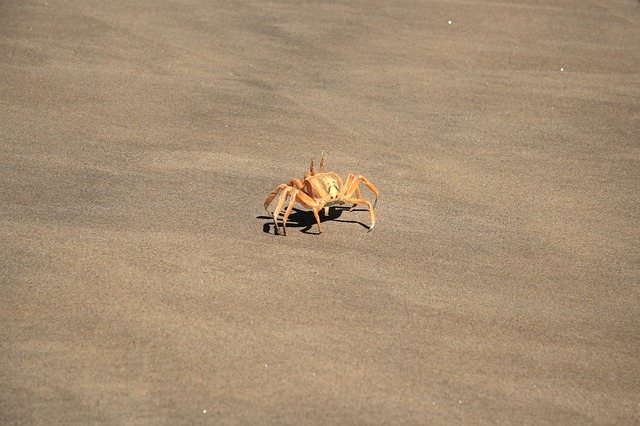 Angola, Sand, Beach, Desert, The Coast, Crab, Shellfish