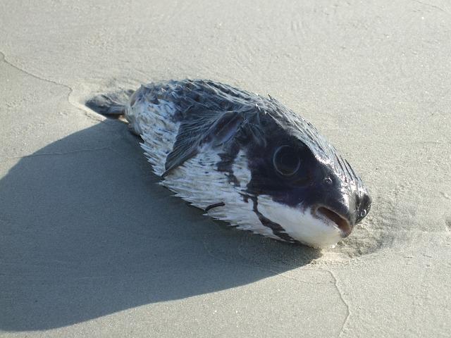Puffer Fish, Shore Line, Coast, Fish, Dead, Beach