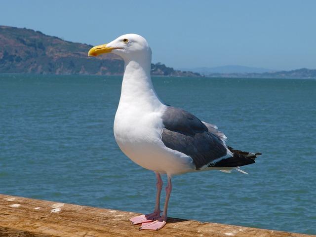 Sea, Water, Bird, Nature, Seashore, Ocean, Beach