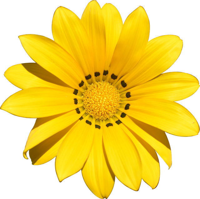 Transparent, Flower, Summer, Yellow, Beach, Holiday
