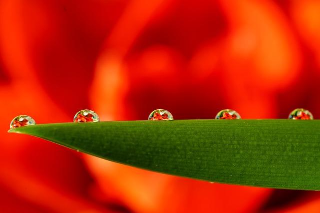 Drip, Teardrop Beads, Beads, Beaded, Flower, Mirroring