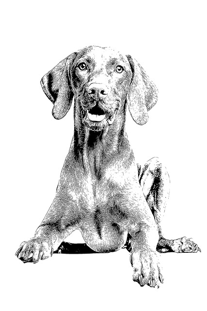 Dog, Beagle, Animal, Portrait, Pet, Mammal, Canine