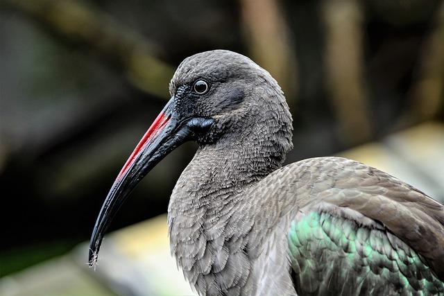 Bird, Wildlife, Nature, Animal, Beak, Feather, Zoo