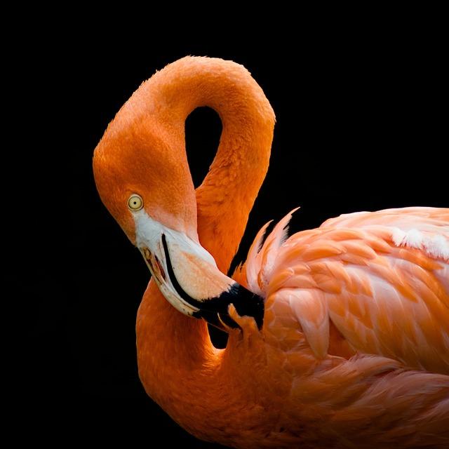 Flamingo, Bird, Pink, Exotic, Tropical, Colorful, Beak
