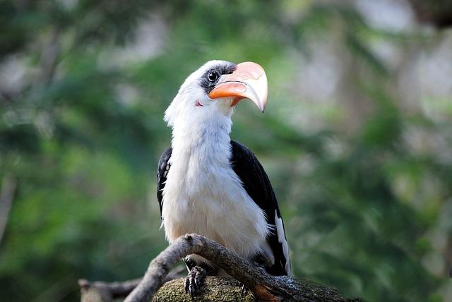 Hornbill, Bird, Tropical, Zoo, Bill, Beak, Feather