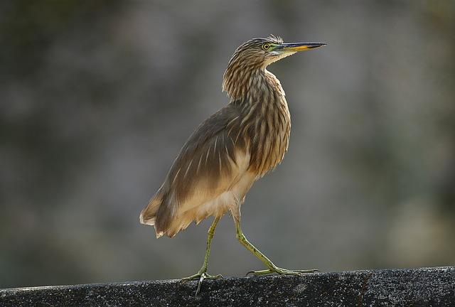 Bird, Wildlife, Nature, Animal, Beak, Avian, Feather