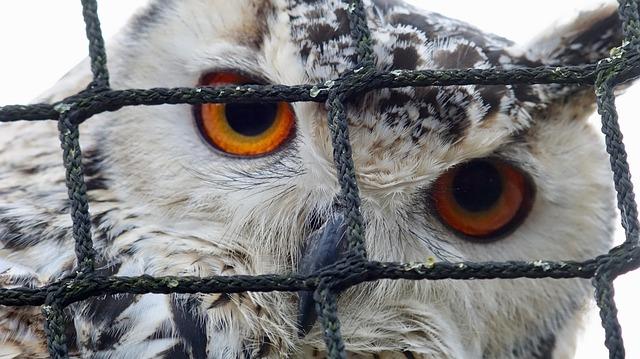 Bird, Feather, Animal, Wildlife, Raptor, Owl, Beak