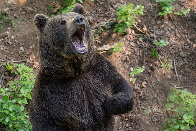 Bear, Brown Bear, Teddy Bear, Hairy, Predator, Beast