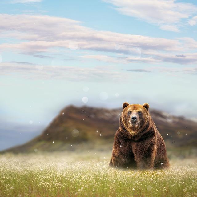 Bear, Flower Meadow, Photomontage, Baby's Breath