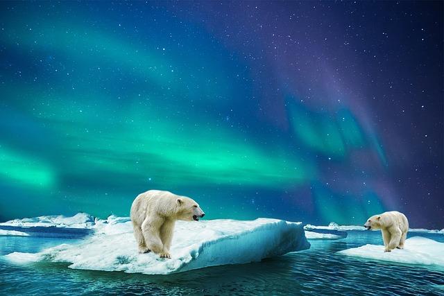 Polar Bear, Glass, Bear, Polar, Animal, Aurora