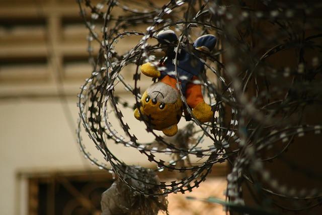 Wire, Teddy, Toy, Bear, Prison, Teddy Bear, Jail