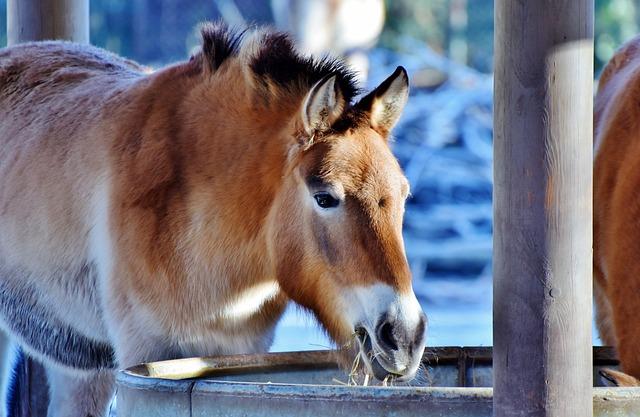 Muli, Mule, Beast Of Burden, Donkey, Animal, Nature
