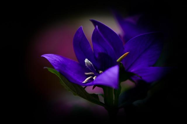 Blossom, Bloom, Flower, Purple, Macro, Beautiful