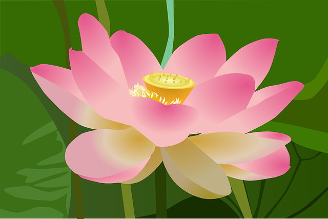Lotus, Flower, Beauty, Beautiful, Blossom, Bloom