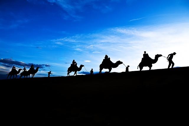 Camel, Blue Sky, Travel, Backlight, Beautiful, Cloud