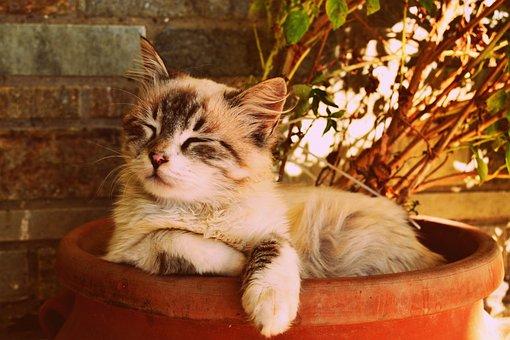 Kitten Asleep In A Pot, Beautiful Cat Asleep