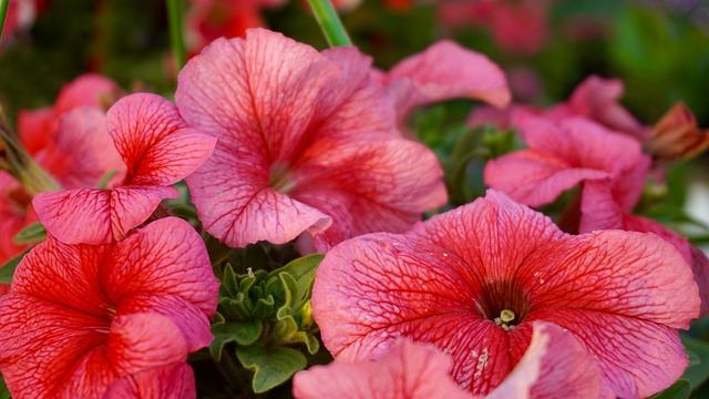 Beautiful Flowers, Bed Of Flowers, Bloom, Blooms