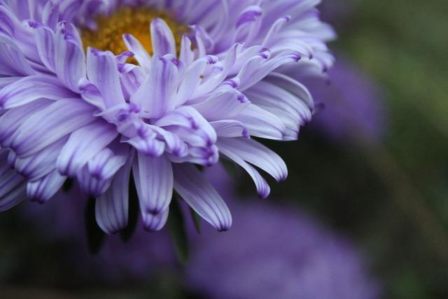 Flowers, Green, Autumn, Petals, Beautiful, Leaves
