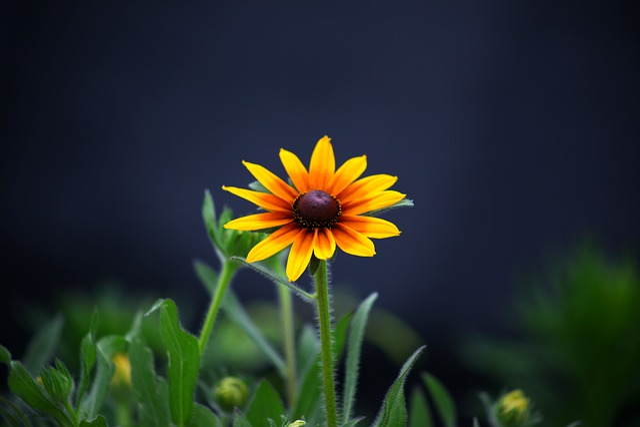 Nature, Plants, Flowers, Summer, Beautiful