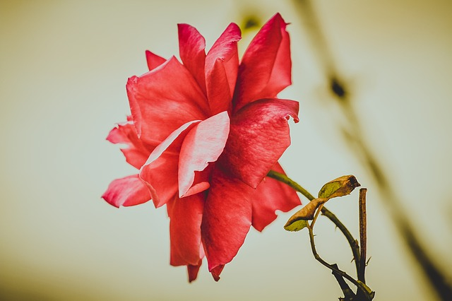 Nature, Flower, No One, Plant, Leaves, Beautiful, Live